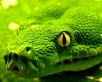 beautiful green hd snake wallpapers