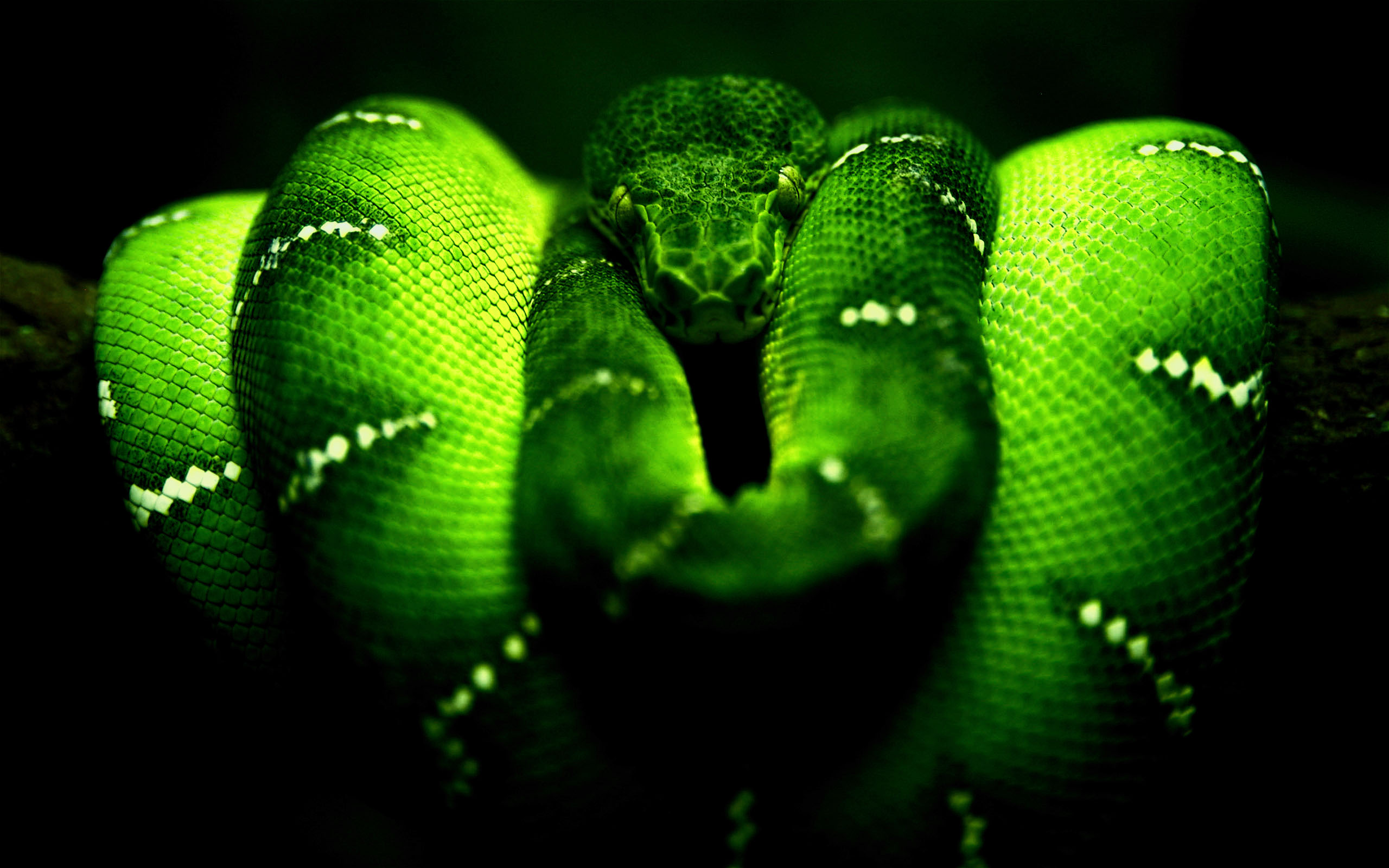 hd snake wallpapers | hd wallpapers pulse