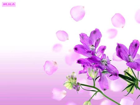 purple violet flower wallpapers
