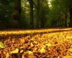 autumn best hd wallpaper