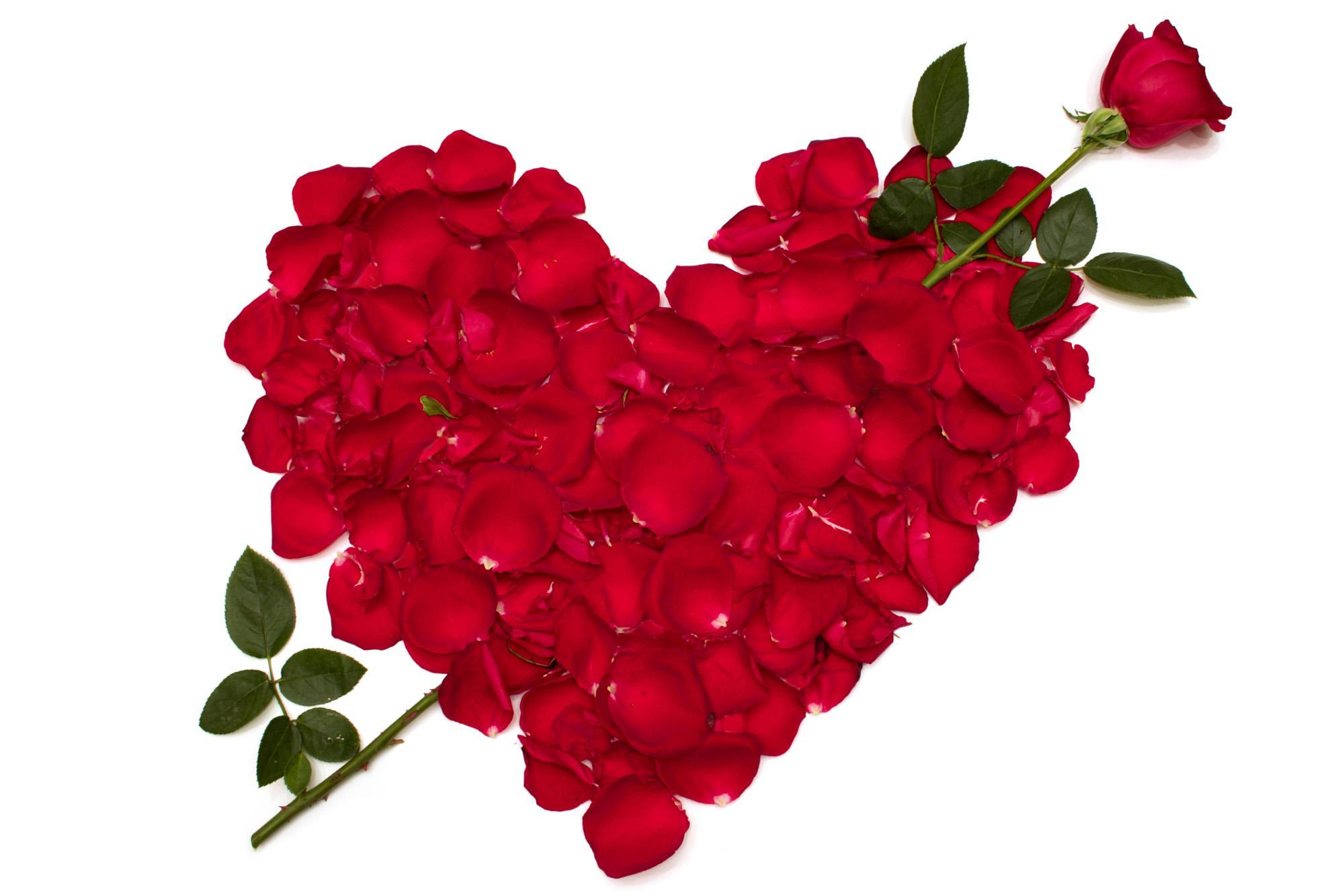 hd red petals heart wallpaper