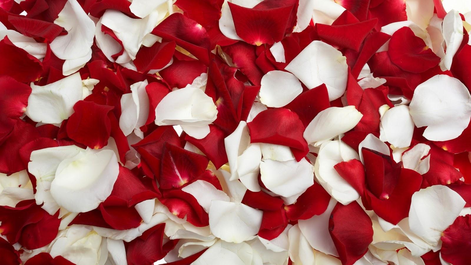 valentines day red petals heart wallpaper