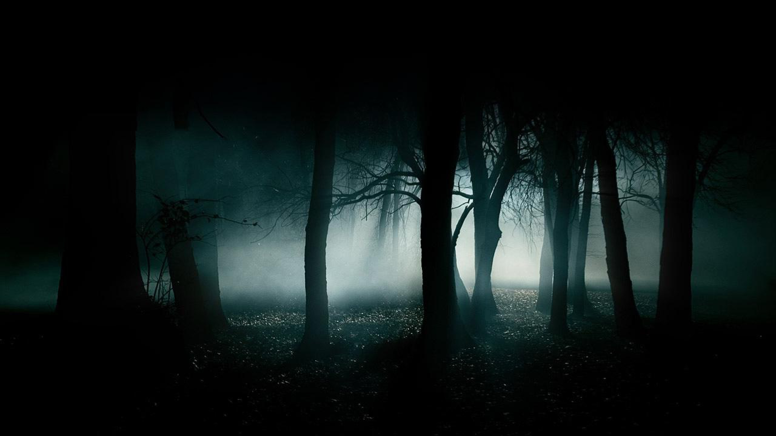 Hd wallpaper darkness - Forest Hd Dark Wallpaper