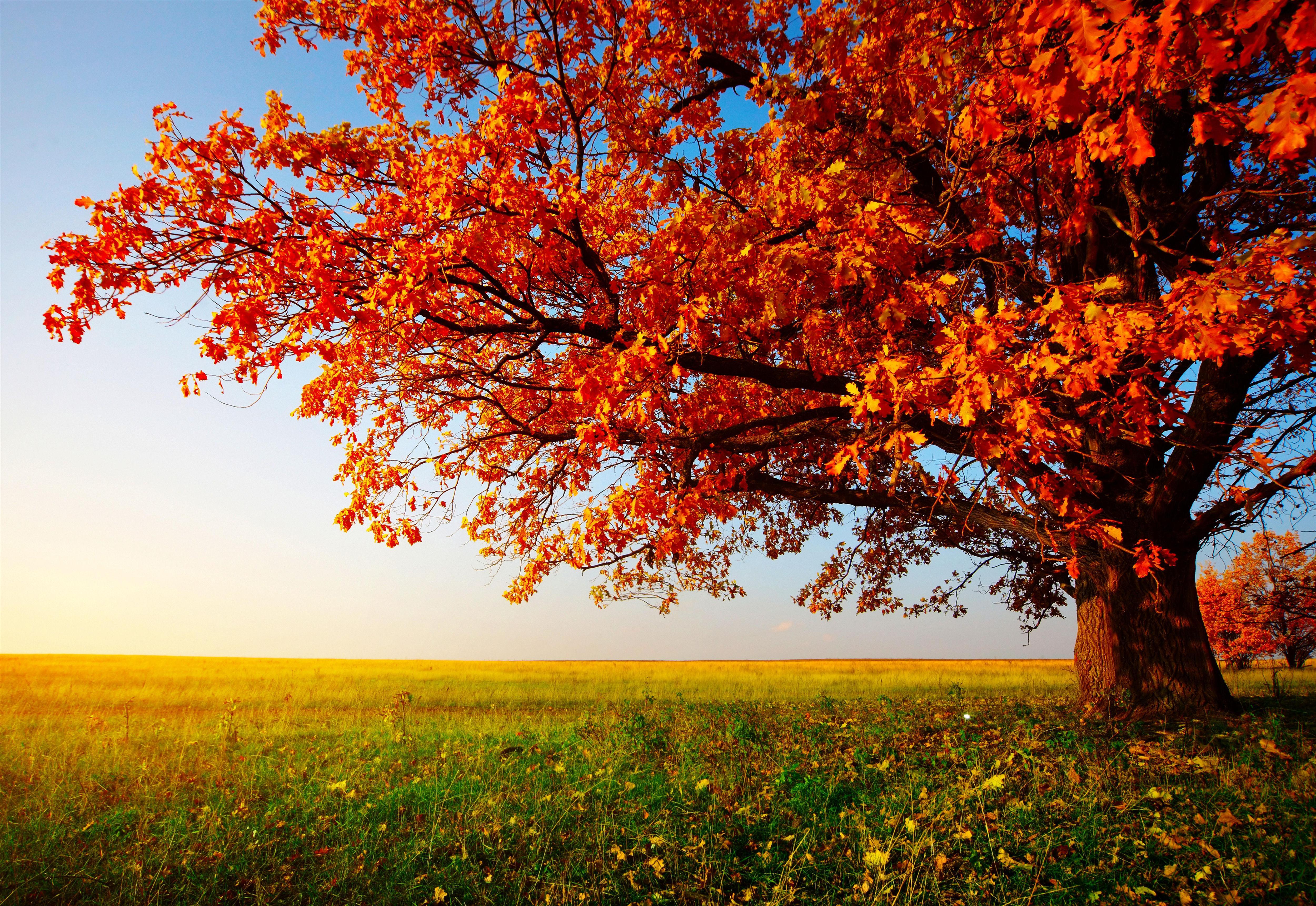 best autumn tree wallpaper