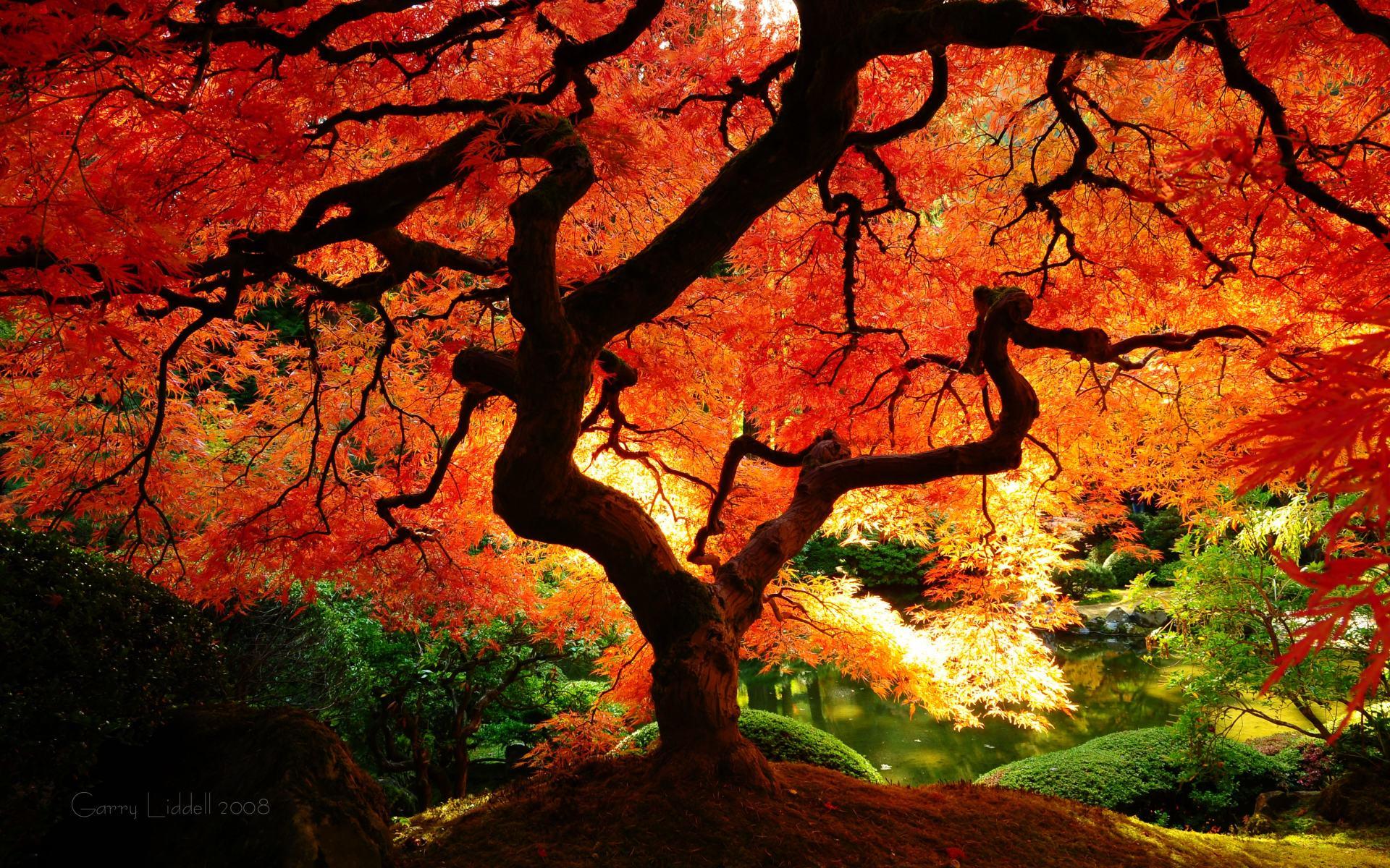 fantastic autumn tree wallpaper