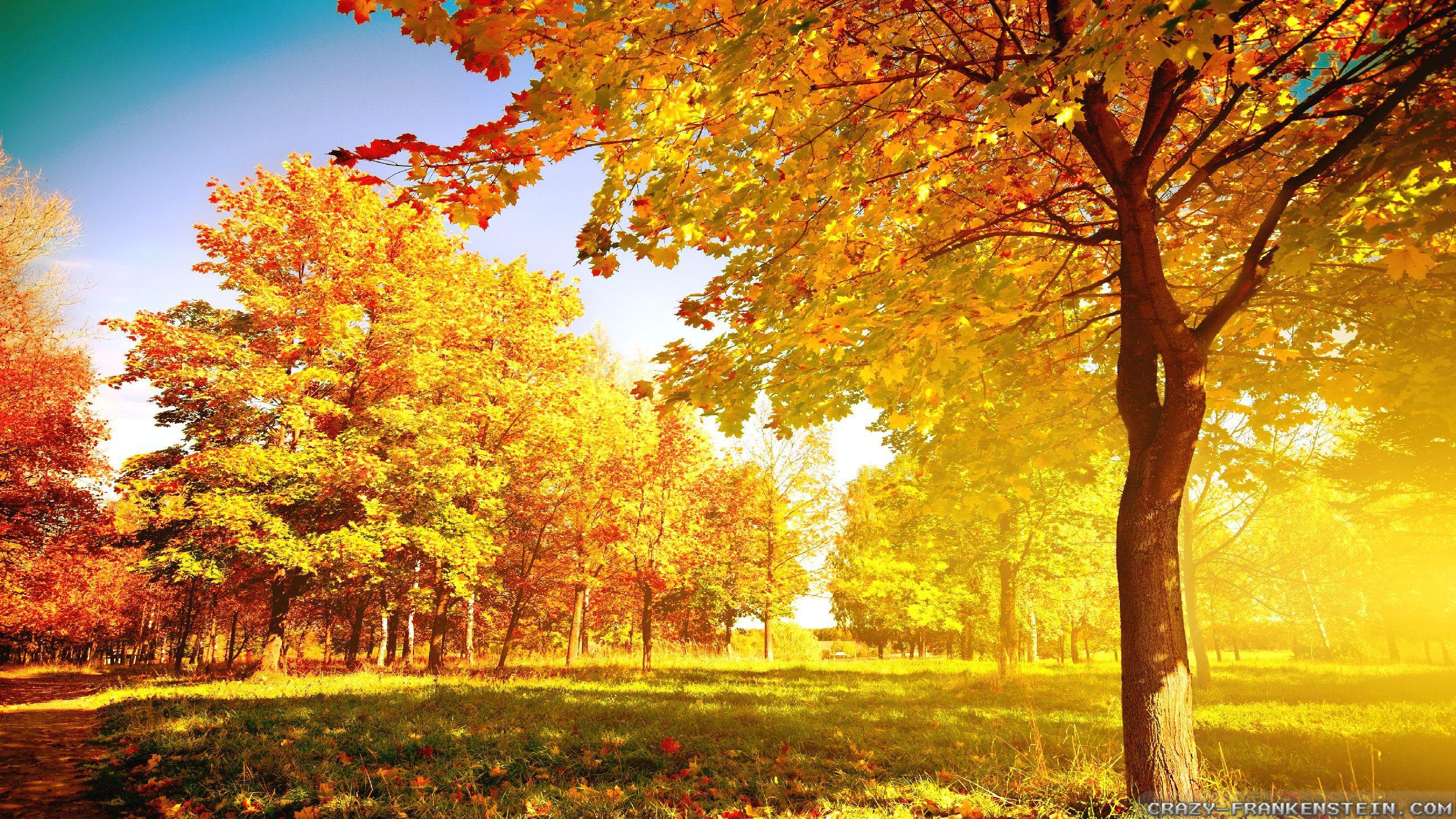 widescreen autumn tree wallpaper