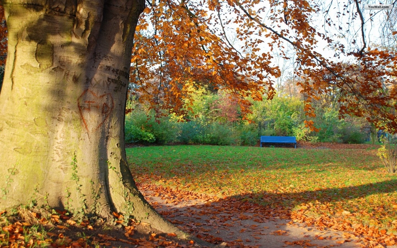 natural autumn tree wallpaper