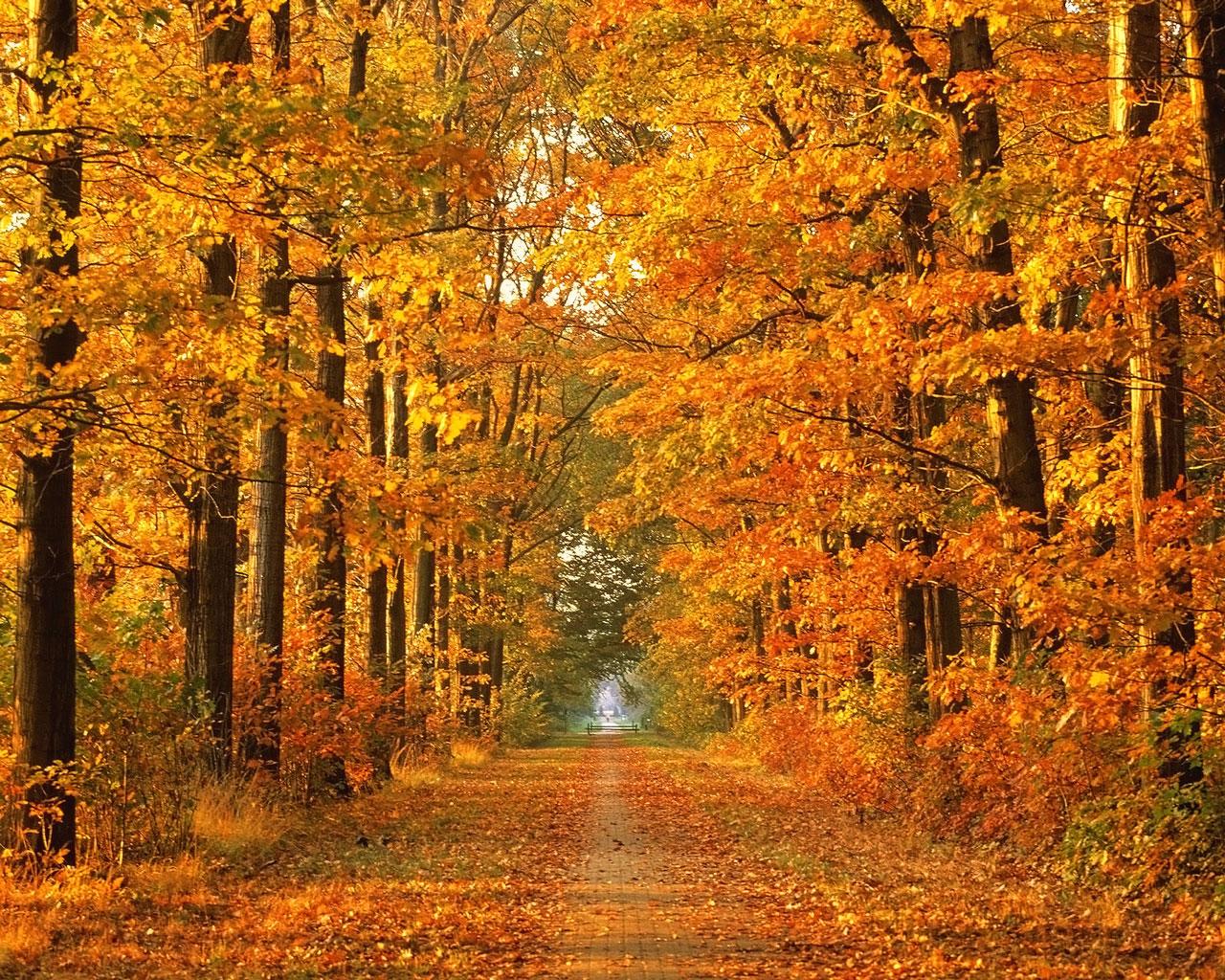 high quality autumn tree wallpaper