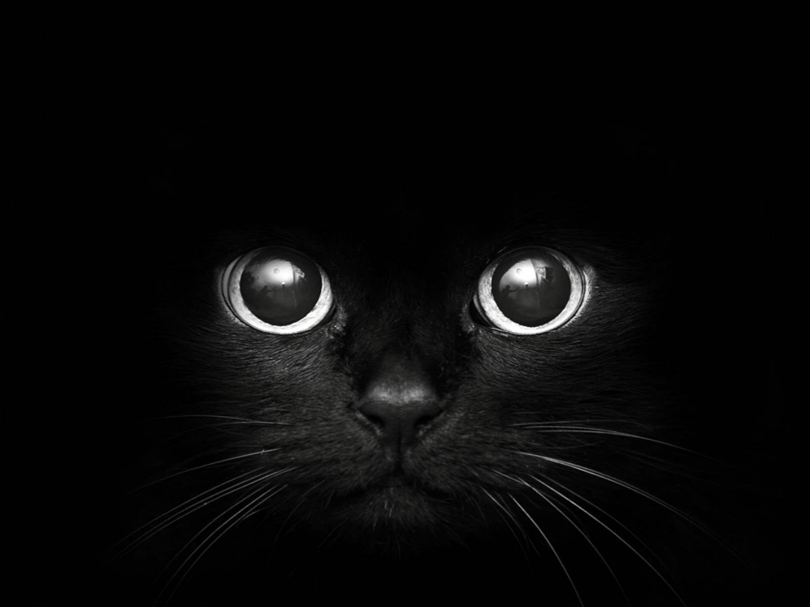 nice black cat background