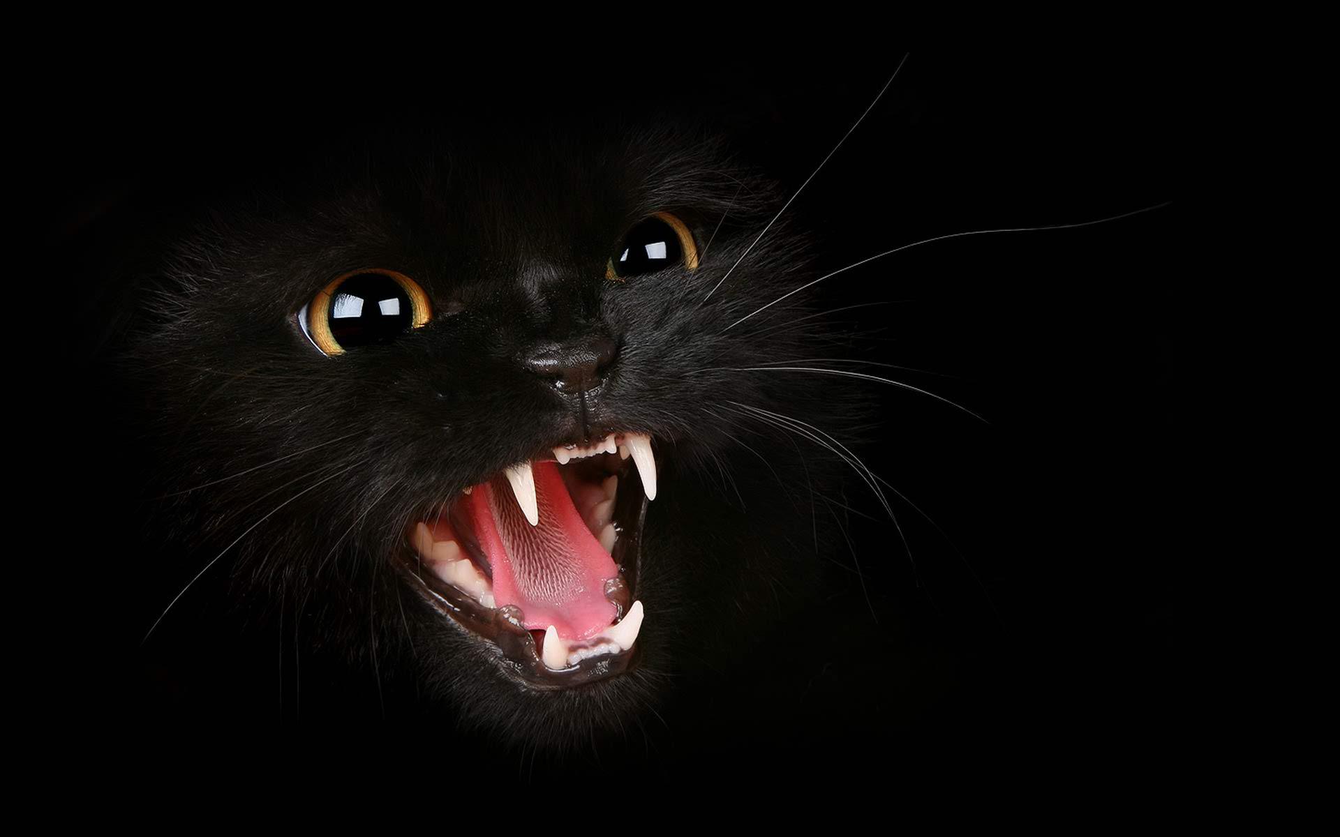 top black cat background