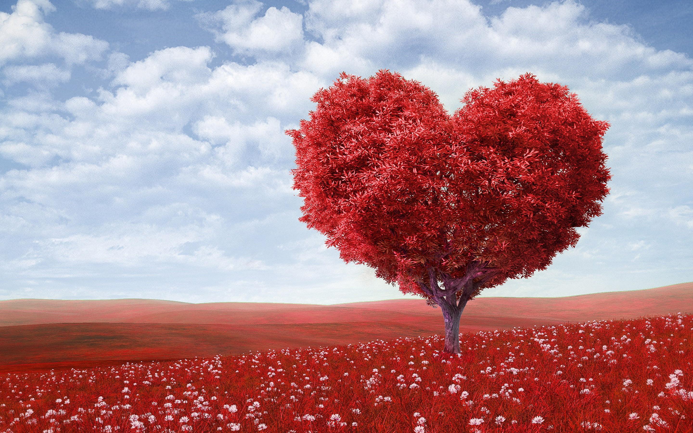 most popular love image wallpaper