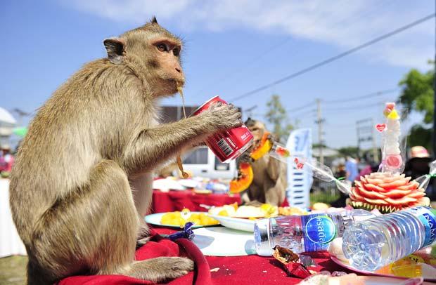 drinking monkey buffet festival image