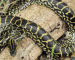 black animal anaconda image