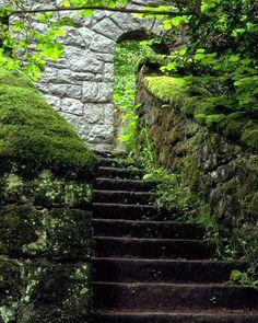 mossy stairways wallpaper