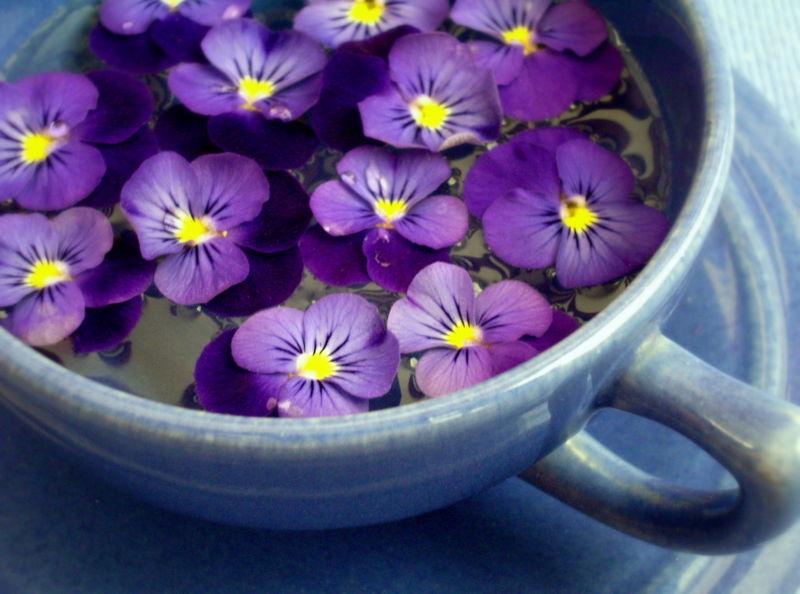 beautiful purple flowers image