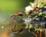 free hd ant image