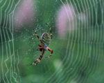spider HD wallpaper download