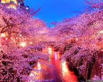 meguro river spring in apan wallpapers