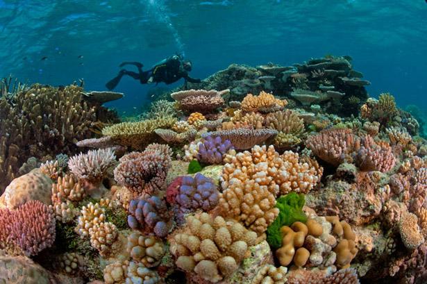 best great barrier reef photos