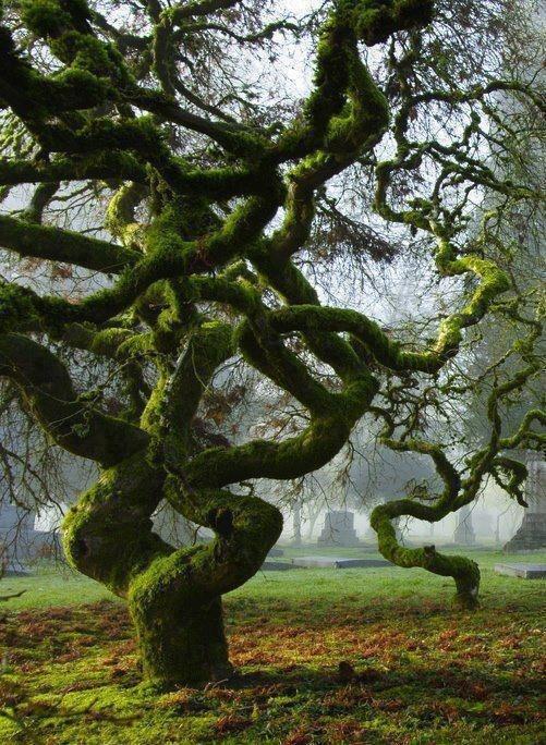 green unusual tree image