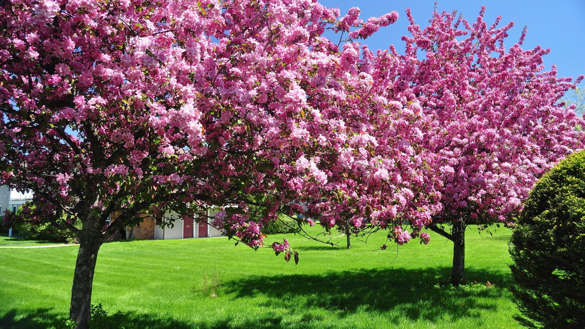 Landscape Natural Spring Image