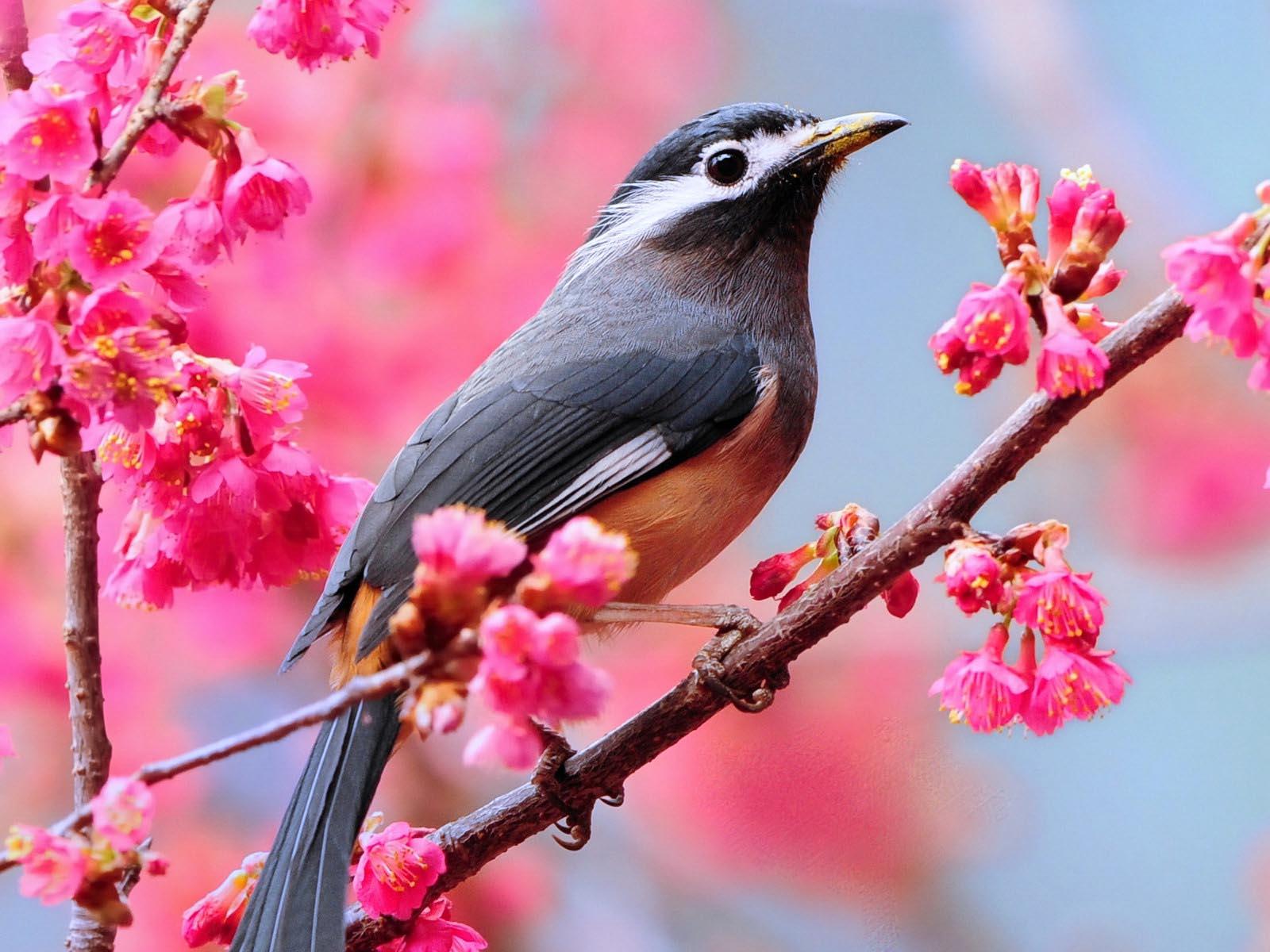 nice best spring image