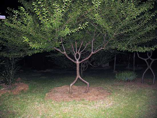 person tree wallpaper
