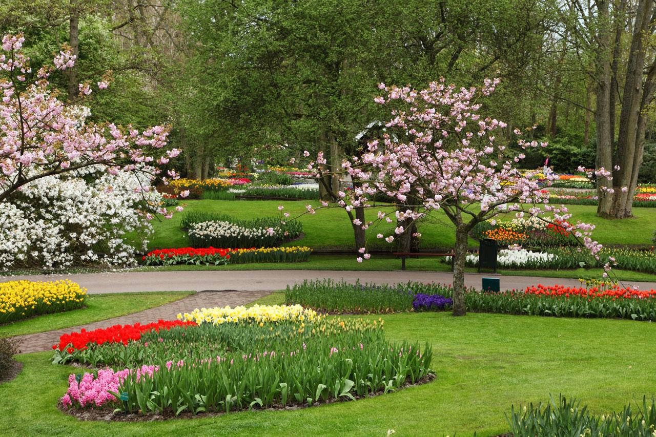 flower garden hd free image