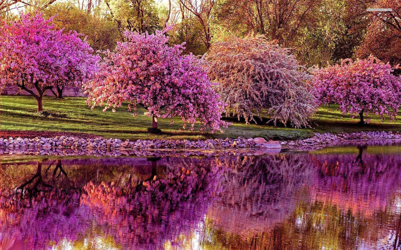 Spring Wallpaper, Beautiful Spring Tree Image, #26363