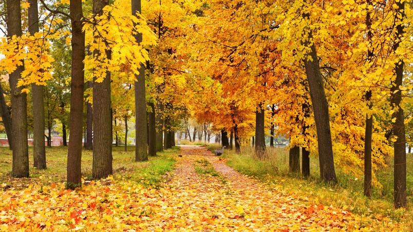 wonderful yellow forest image