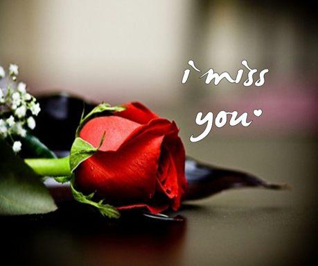 beautiful rose i miss you