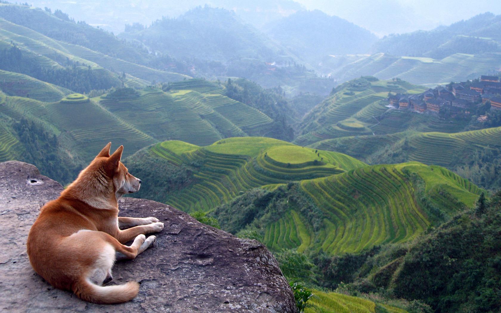 animal dog wallpaper