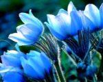 coo natural natural image