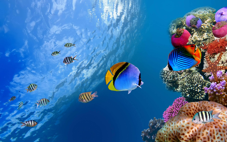 amazing under water image