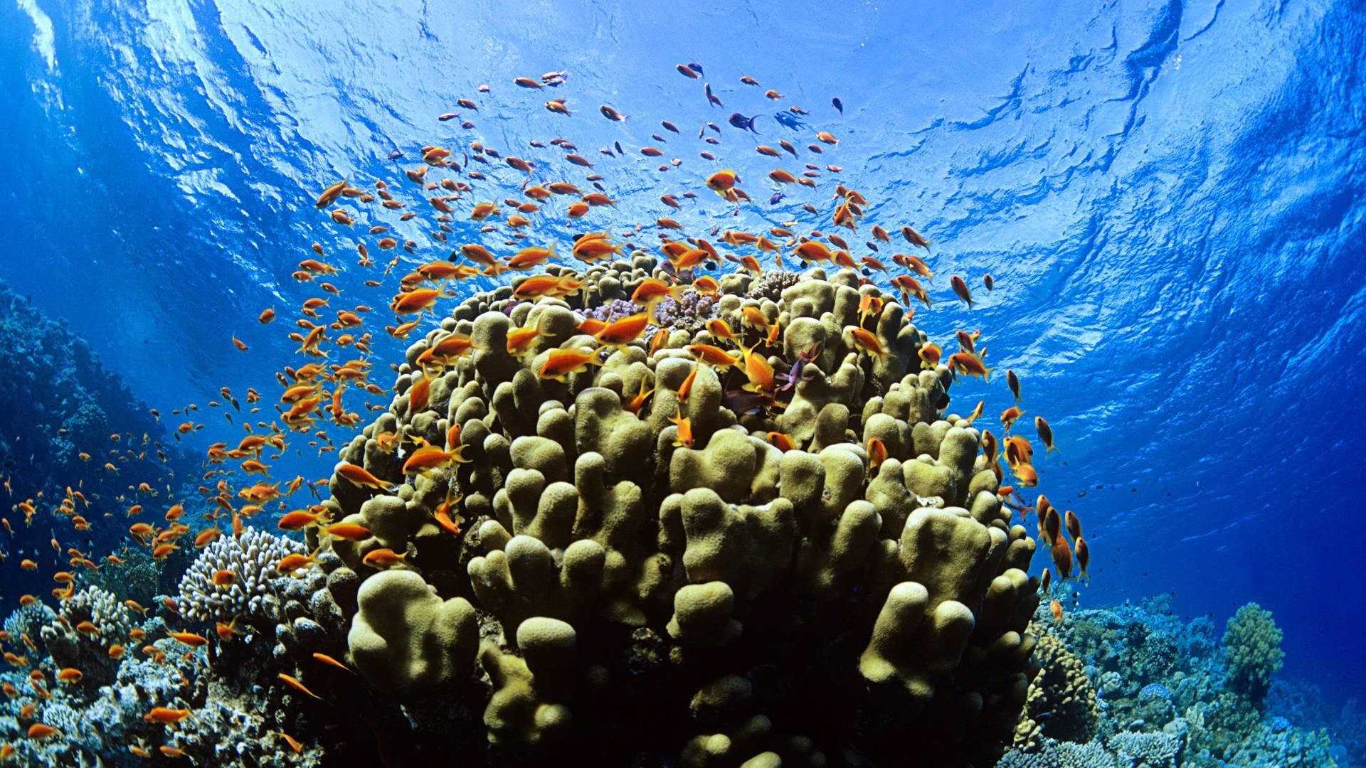 beautiful under water wallpaper