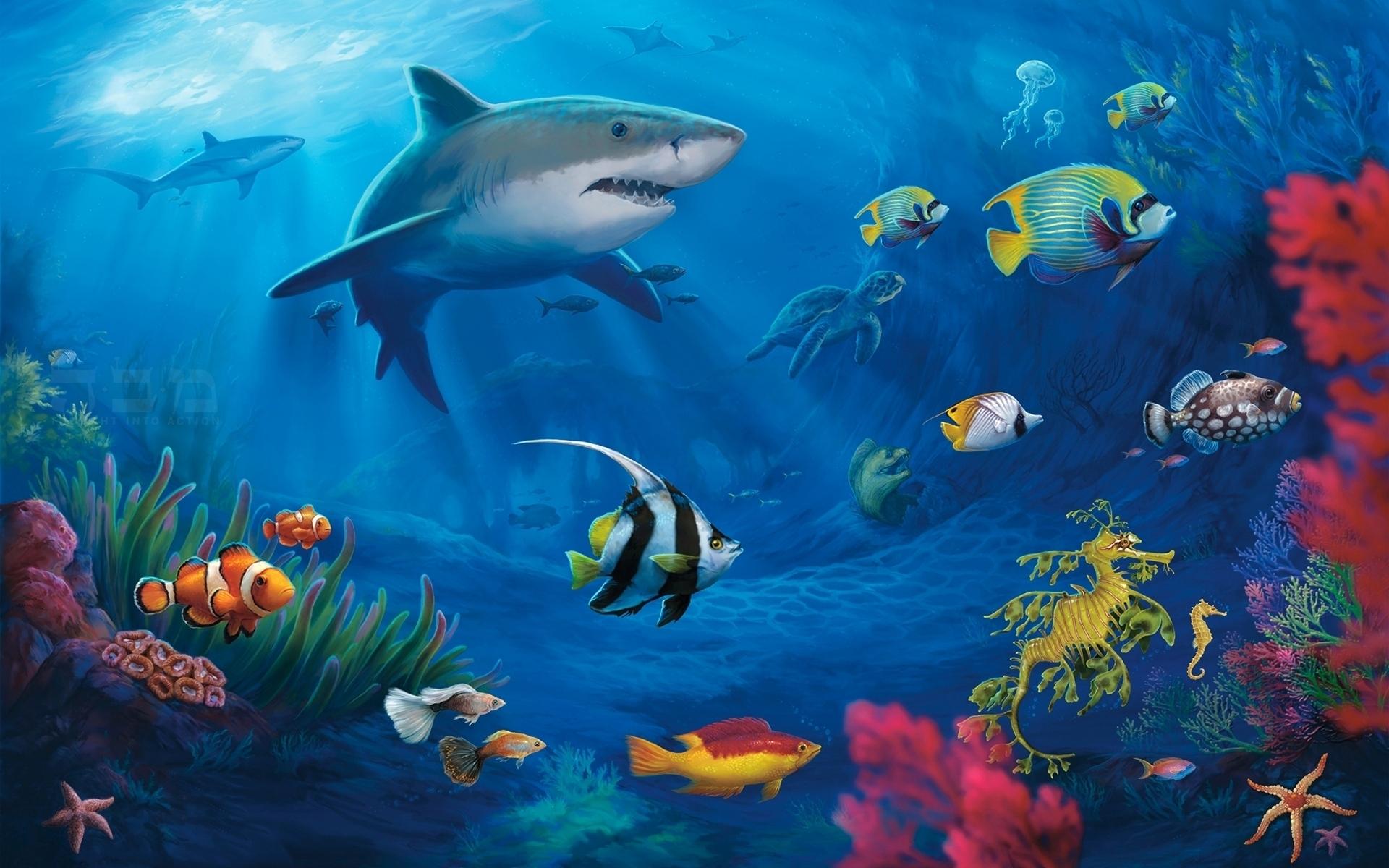 underwater world hd image
