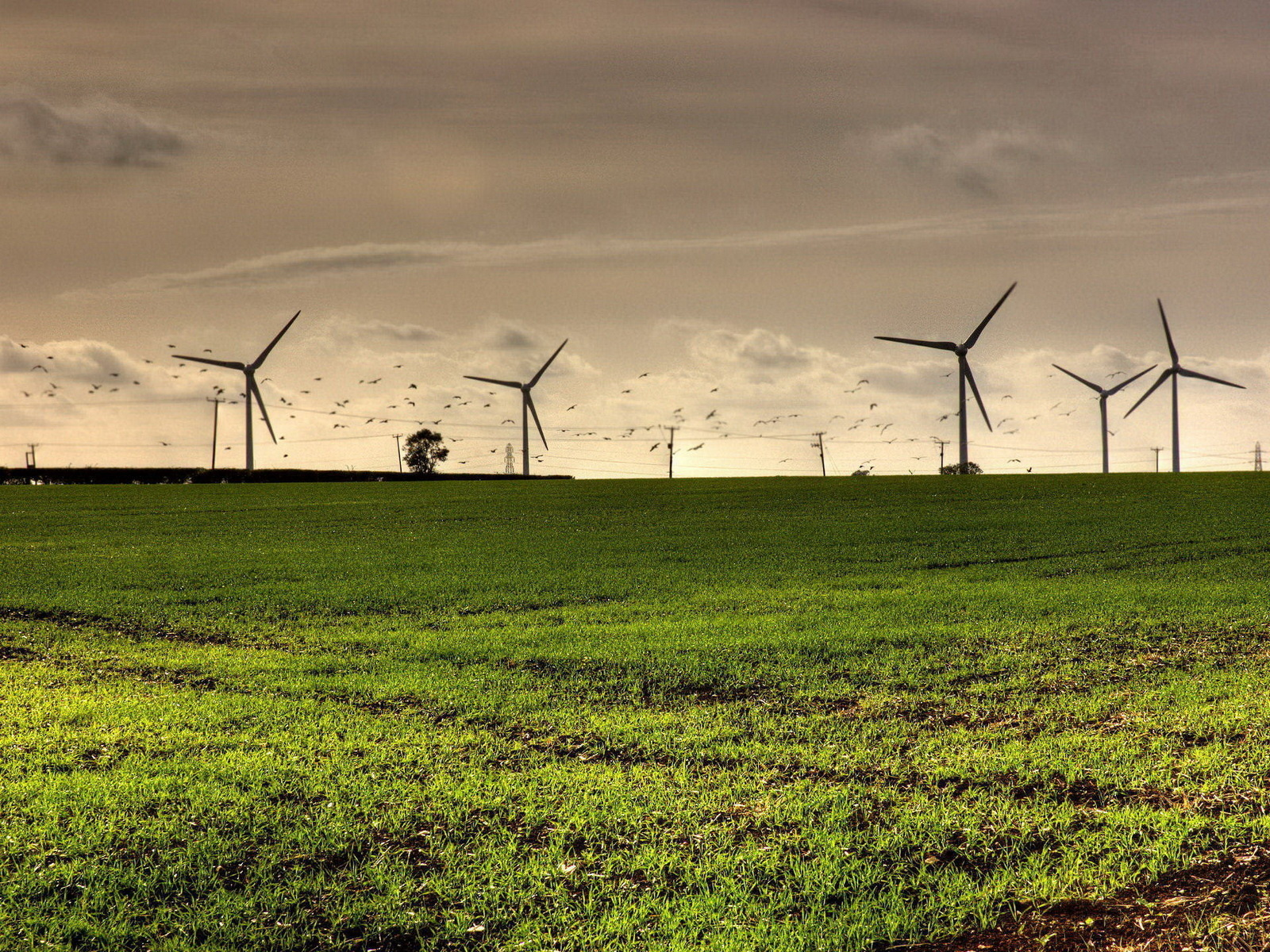 green grass windmill image