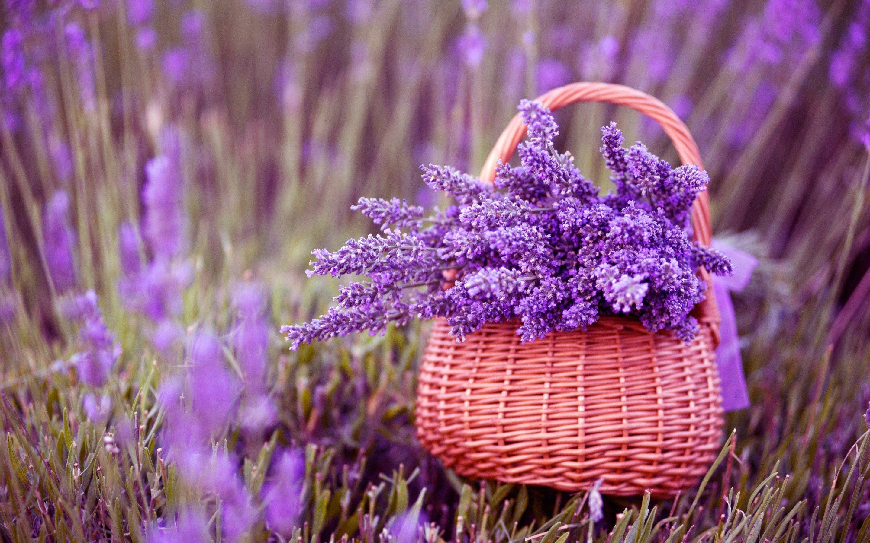 nice 3d lavender flower image