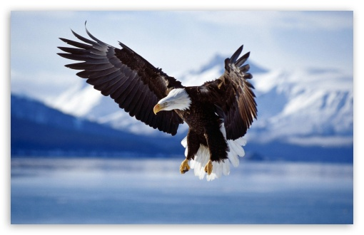 blad eagle hd image