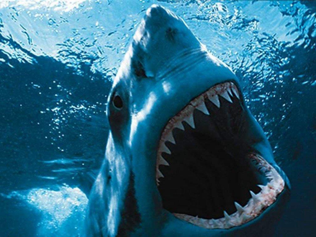 top hd shark wallpaper