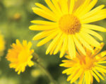 beautiful natural flower image