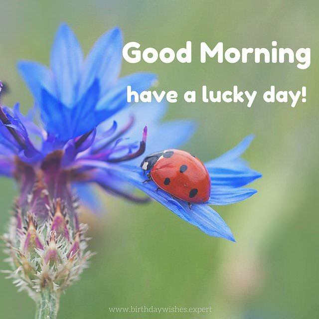 good morning on beautiful image