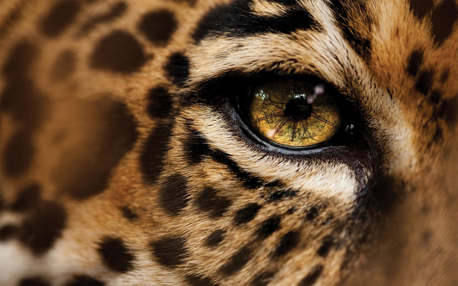 so nice jaguar image