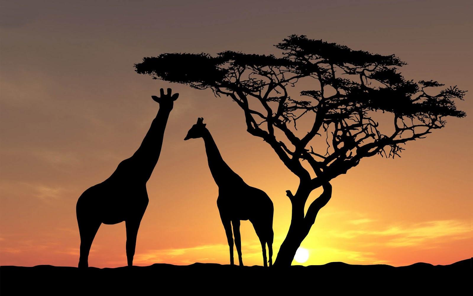 so nice giraffe image