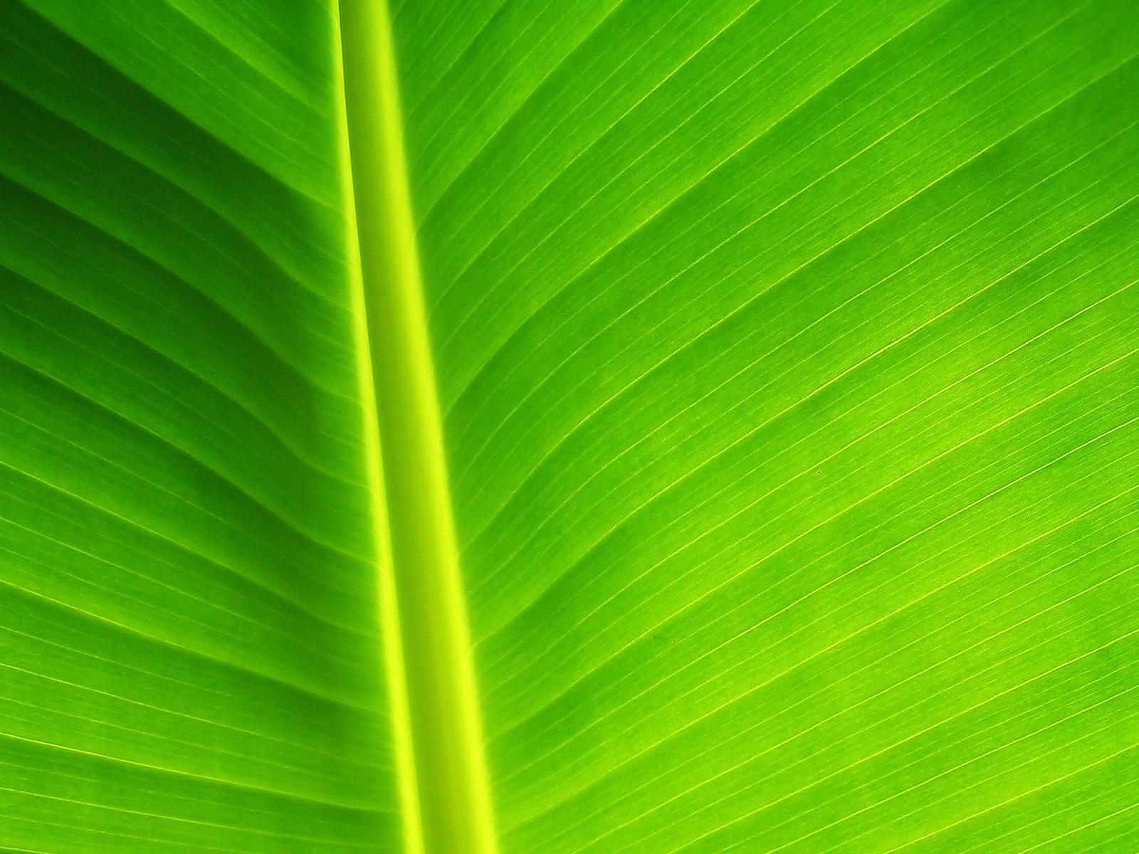amazing Green Leaf Background