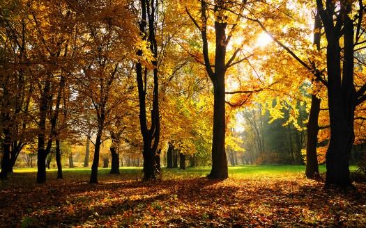 amazing natural Fall Season Wallpaper
