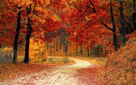 best hd autumn image