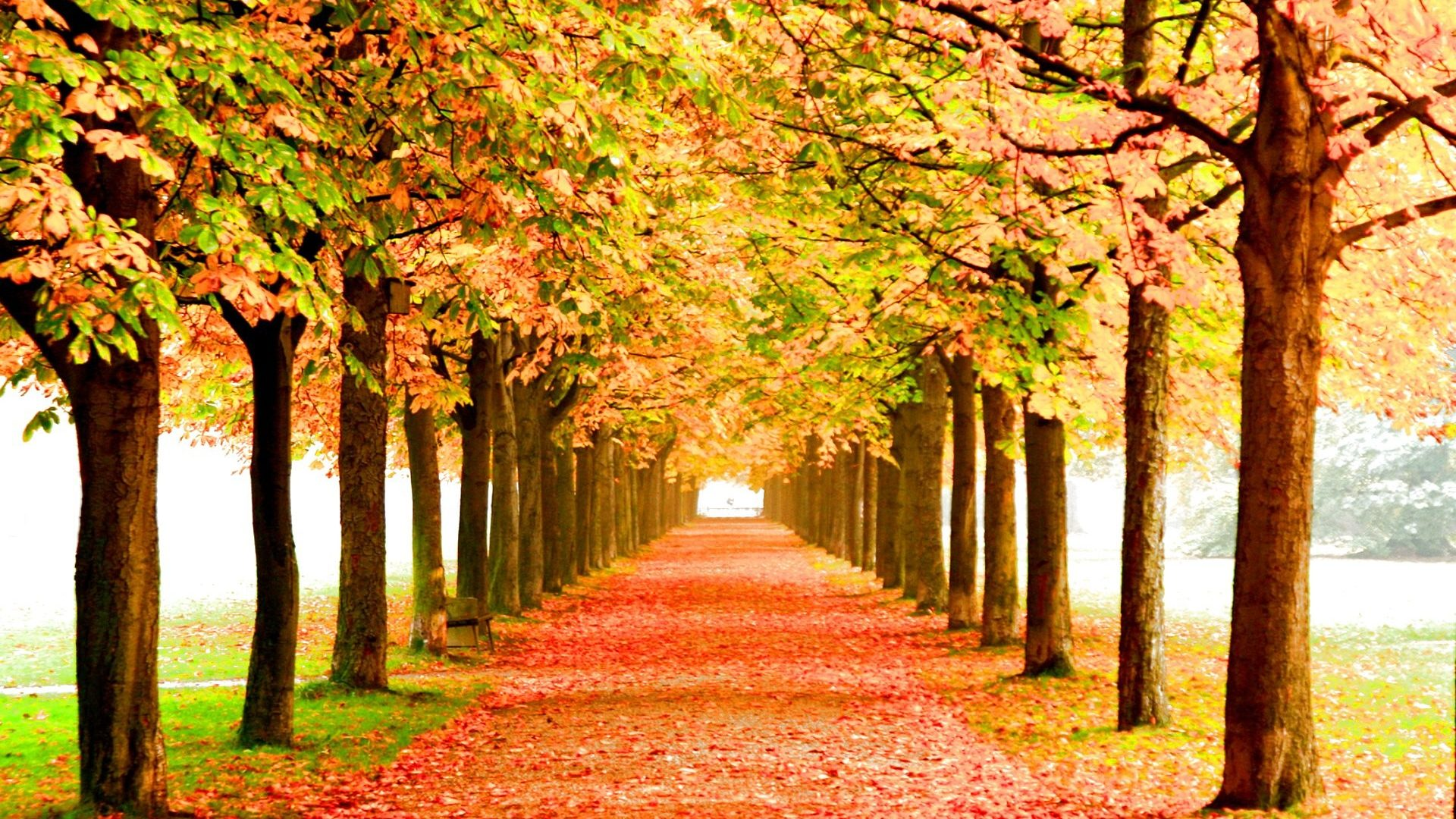 forest natural Fall Season Wallpaper