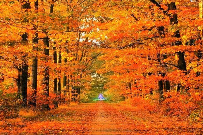 yellow Fall Season Wallpaper