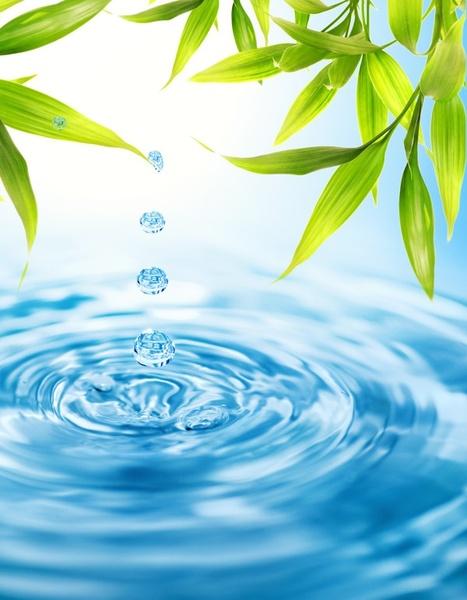 top hd Water Drops on Green Leaf